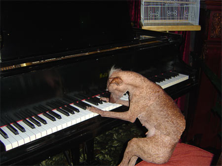 The Piano SAM