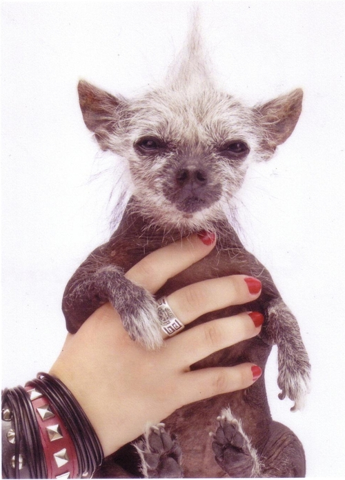 Sam-World's Ugliest Dog's Girlfriend, Tater Tot